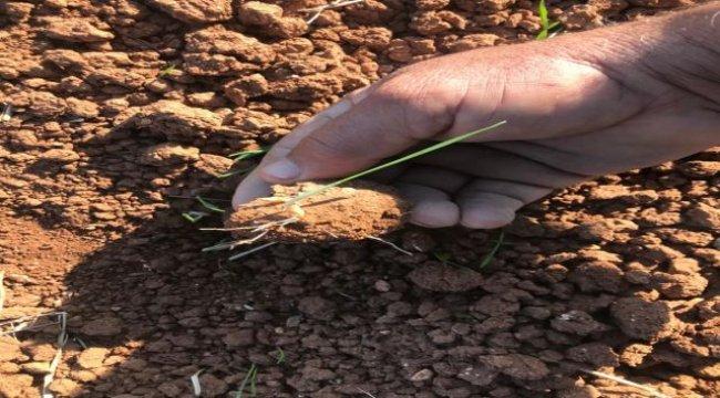 Mardin'de yaşanan kuraklık çiftçileri endişelendiriyor